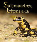 Téléchargez le livre :  Salamandres, tritons & Cie